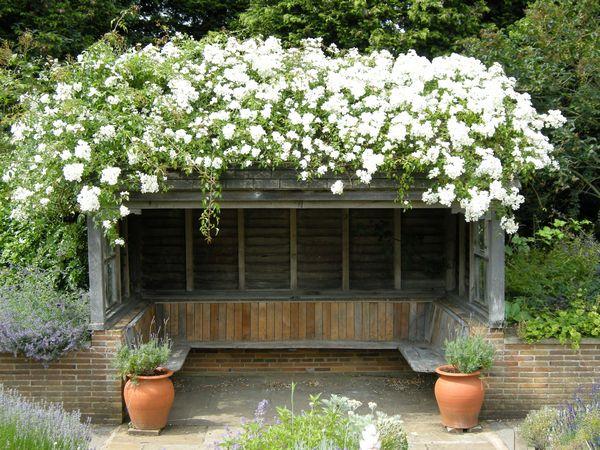 Scented Garden IMG_8309
