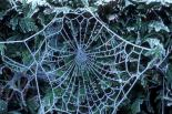 spiderweb in frost PJA 4880