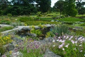 Rock garden. June