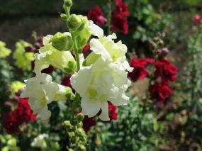 Understanding flowering