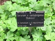 Geranium collection